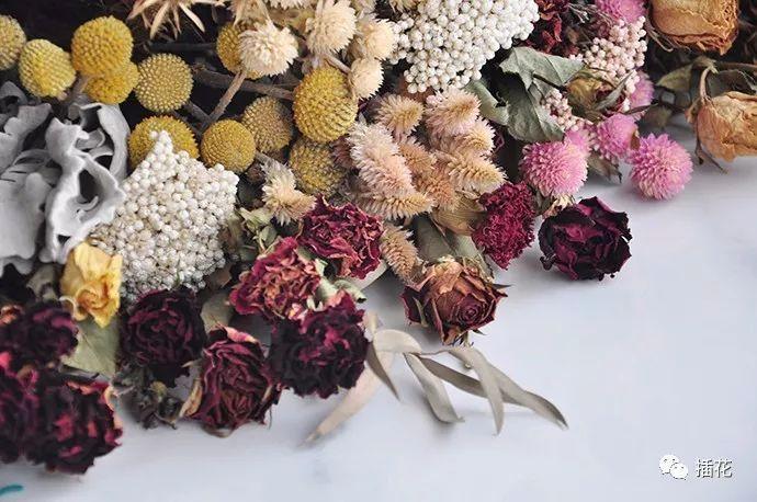 什么花适合在室内养_哪些花适合做干花? - 海外华人网