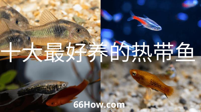 十大最好养的热带鱼