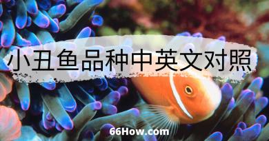 小丑鱼英文 – 小丑鱼品种中英文对照 – 养鱼爱好者必备
