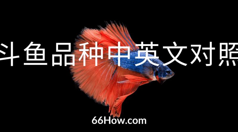 斗鱼英文 – 斗鱼品种中英文对照 – 养鱼爱好者必备