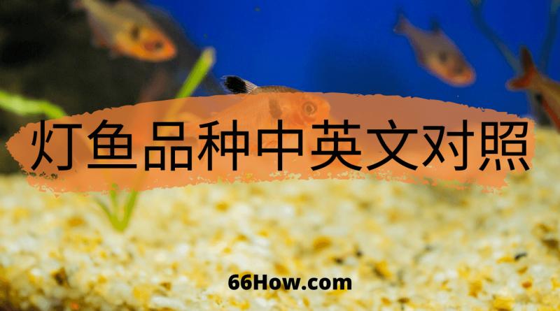 灯鱼英文 – 灯鱼品种中英文对照 – 养鱼爱好者必备