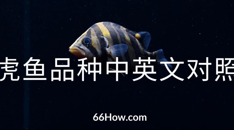 虎鱼英文 – 虎鱼品种中英文对照 – 养鱼爱好者必备