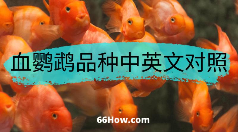 血鹦鹉英文 – 血鹦鹉品种中英文对照 – 养鱼爱好者必备