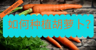 如何种植胡萝卜