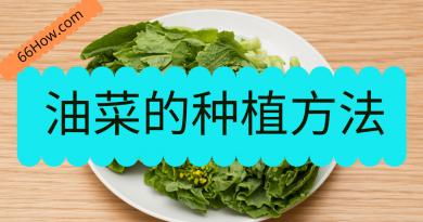 油菜的种植方法