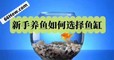 新手养鱼如何选择鱼缸