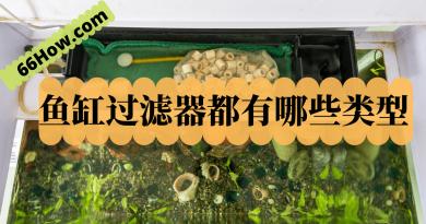 鱼缸过滤器都有哪些类型?
