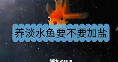 养淡水鱼要不要加盐
