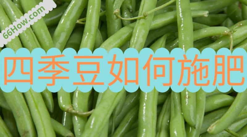 四季豆如何施肥