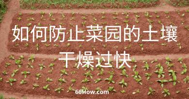 如何防止菜园的土壤干燥过快 – 改善沙质土壤的3种办法