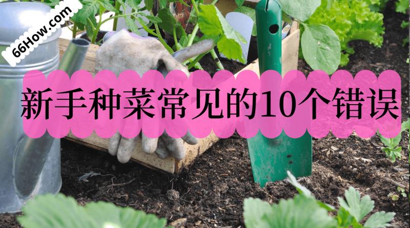 新手种菜常见的10个错误