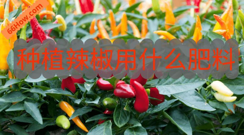 种植辣椒用什么肥料