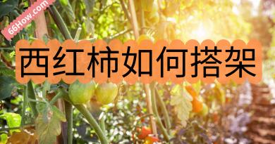 西红柿如何搭架