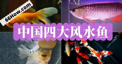 中国四大风水鱼
