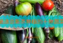 最适合新手种植的十种蔬菜