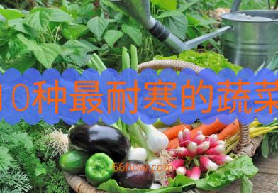 10种最耐寒的蔬菜,适合早春种植