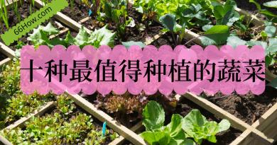 十种最值得种植的蔬菜