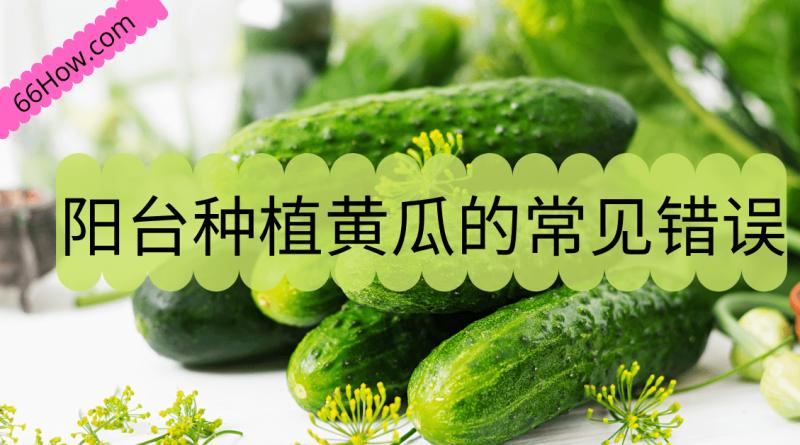 阳台种植黄瓜的五个常见错误