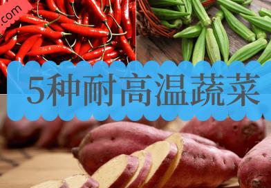 5种耐高温蔬菜