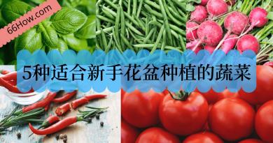 5种适合新手花盆种植的蔬菜