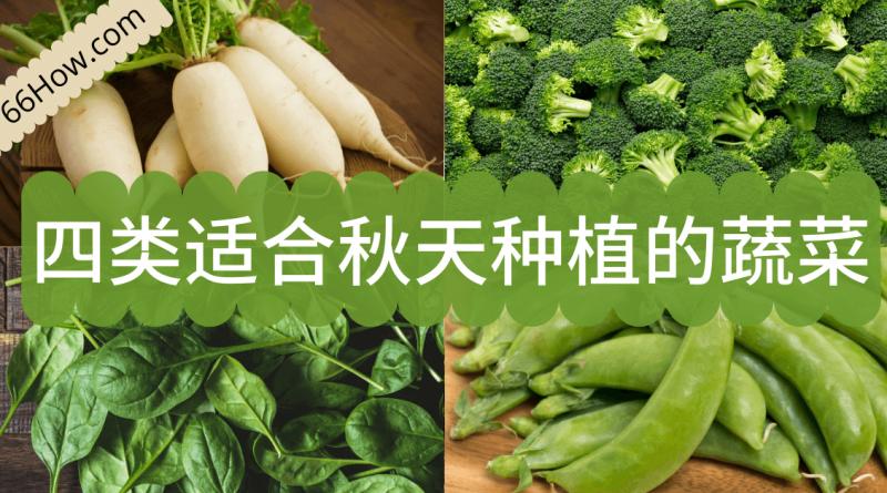四类适合秋天种植的蔬菜