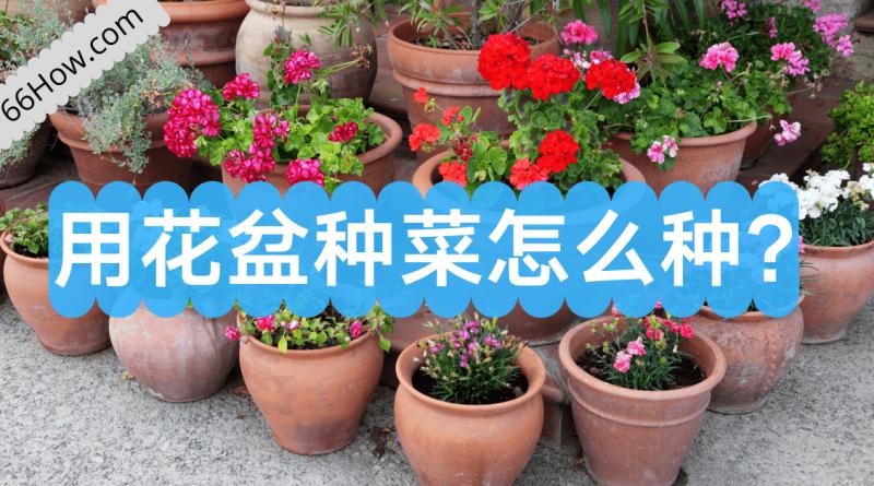 用花盆种菜怎么种