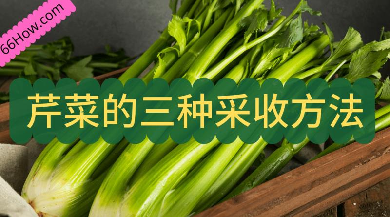芹菜的三种采收方法