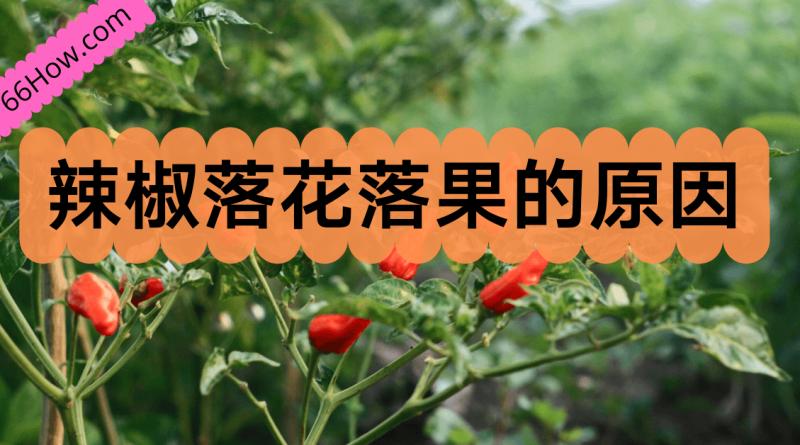 辣椒落花落果的原因
