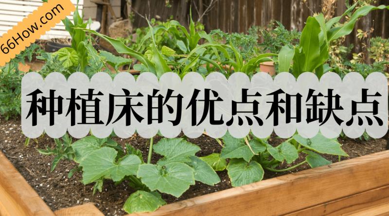 什么是种植床?种植床种菜的优点和缺点,我个人的经验分享