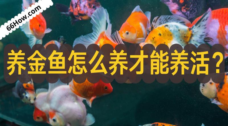 养金鱼怎么养才能养活