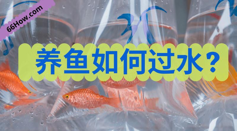 养鱼如何过水新鱼入缸的步骤,养鱼必读