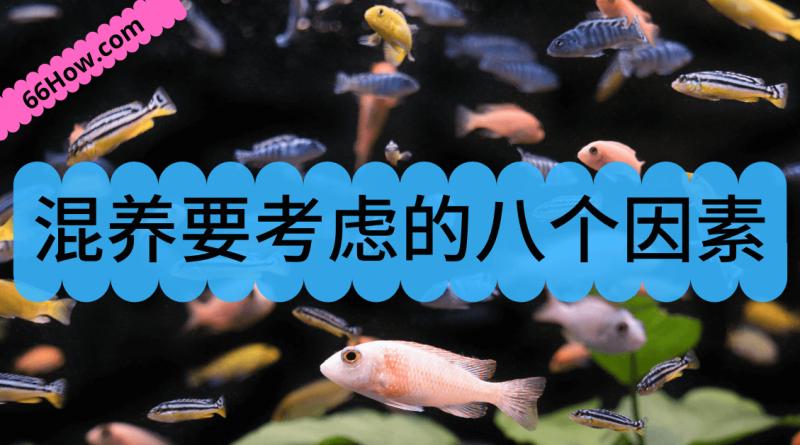 观赏鱼混养要考虑的八个因素