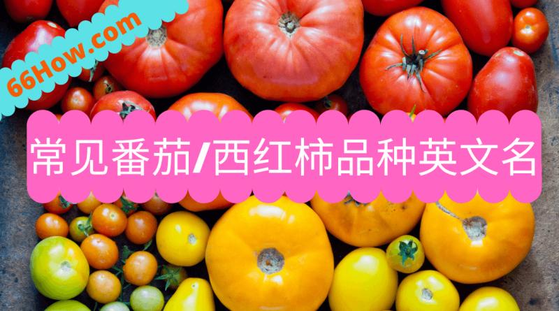 西红柿英文 - 常见番茄西红柿品种英文名