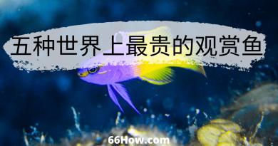 五种世界上最贵的观赏鱼