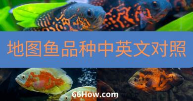 地图鱼英文 – 地图鱼品种中英文对照 – 养鱼爱好者必备