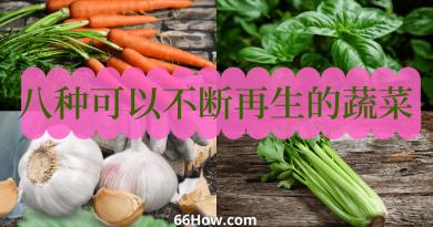 八种可以不断再生的蔬菜