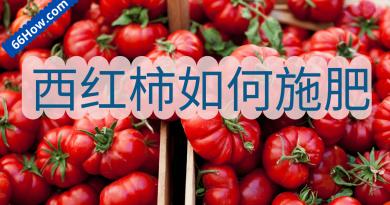 西红柿如何施肥