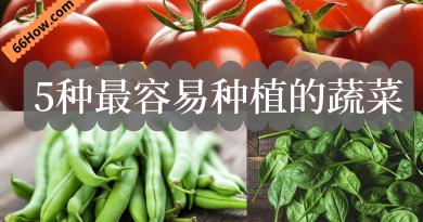 5种最容易种植的蔬菜