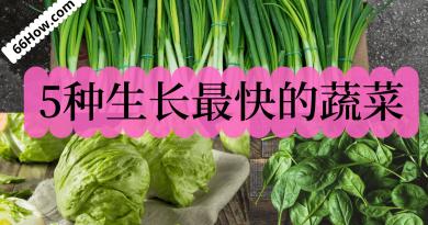 5种生长最快的蔬菜
