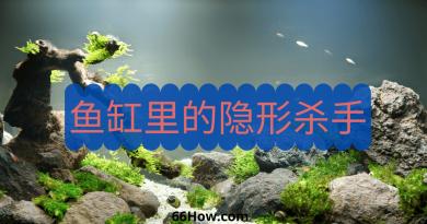 养鱼先养水系列 – 鱼缸里的隐形杀手,养鱼必读