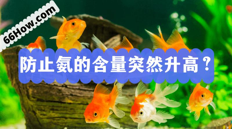 如何防止鱼缸里氨的含量突然升高