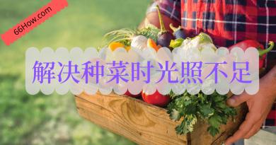 五个小技巧解决种菜时光照不足的问题