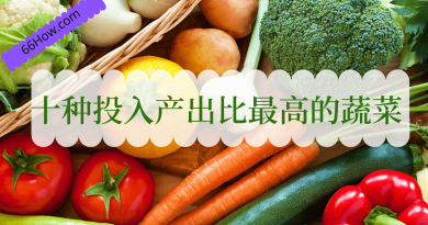 十种投入产出比最高的蔬菜