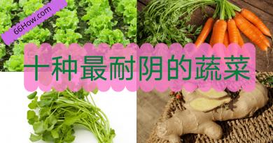 十种最耐阴的蔬菜