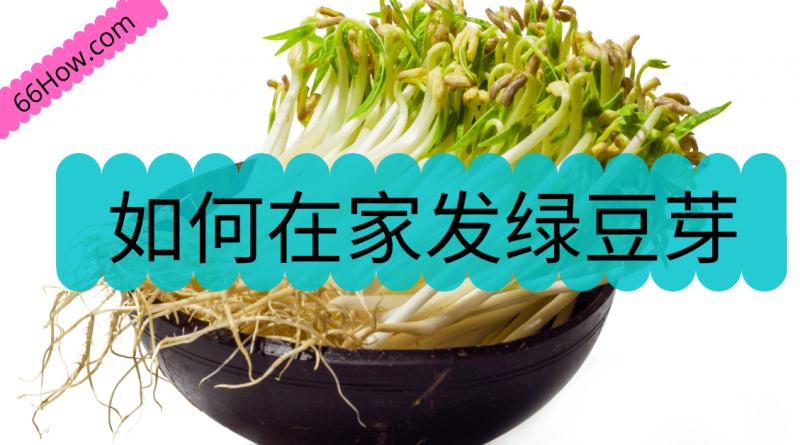 如何在家发绿豆芽