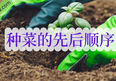 新手种菜 – 种菜的先后顺序