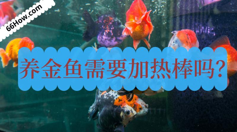 养金鱼需要加热棒吗