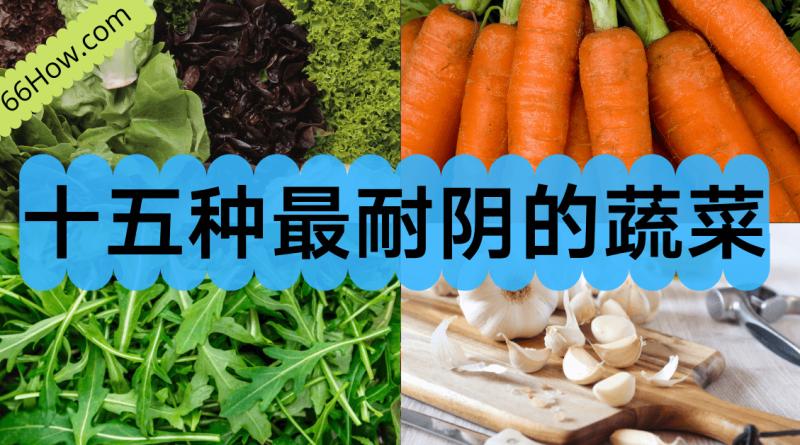 十五种最耐阴的蔬菜