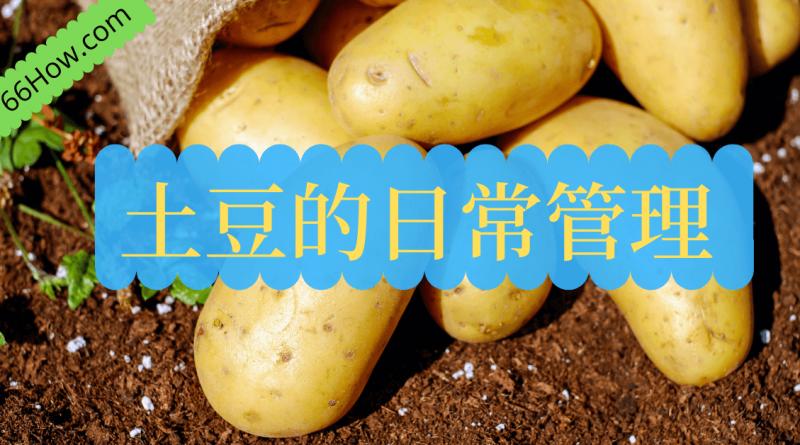 土豆的日常管理