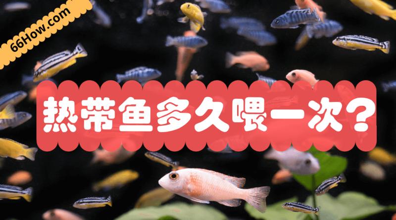 热带鱼多久喂一次